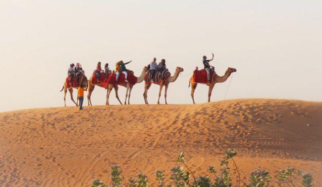 Сафари в пустыне в Рас-эль-Хайме